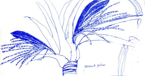 sketch of palm fronds on a coconut palm tree in Costa Rica