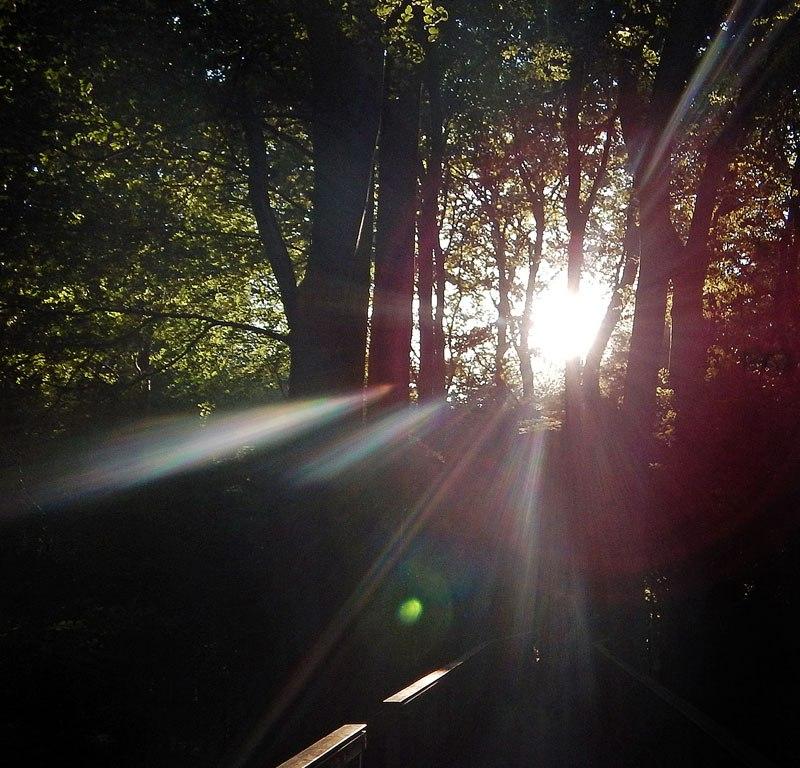 Sunlight flaring through the trees in Mons Klint, Denmark