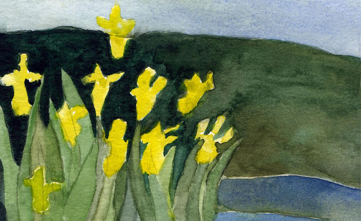 watercolour in my sketchbook of the contrast of thelight yellow irises against dark green pond and darkreflections against lightsky reflection